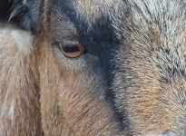 tiere1